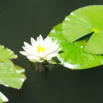 Slider Photo 1 – Lotus